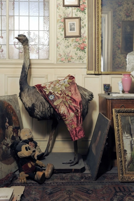 Ostrich and Mickey Mouse, paris, flat, abandoned, 1942, 2010